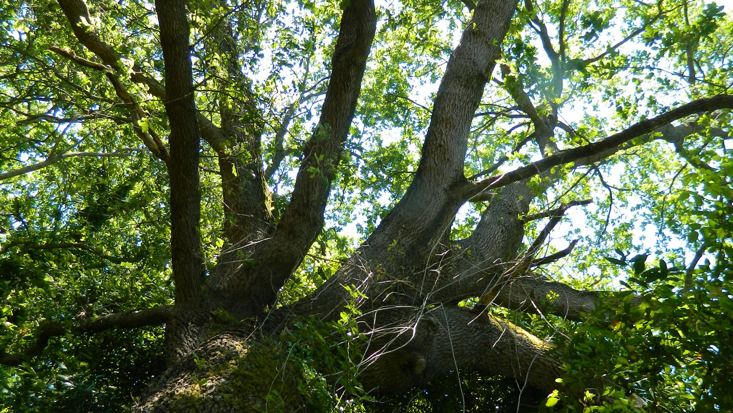Ufficio Verde Comune Ancona : Manutenzione del verde i prossimi interventi del comune