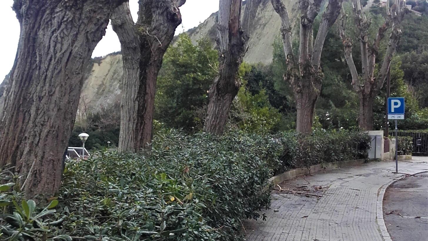 Ufficio Verde Comune Di Ancona : Potature e sistemazione aree verdi gli interventi in vista della
